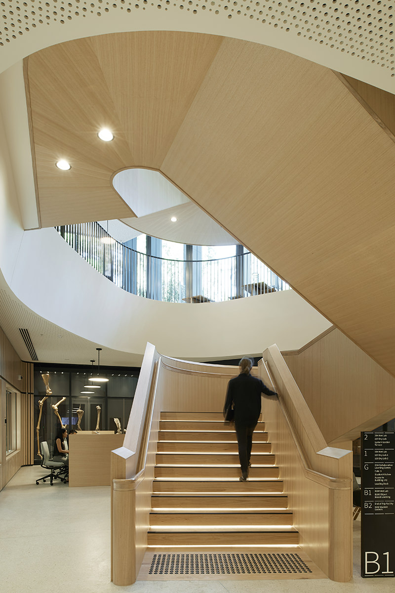 Climbing up the timber clad stairway at Melbourne Universitys WEB Building